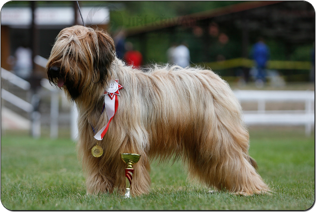 briard FLAME OF PASSION VELMOND